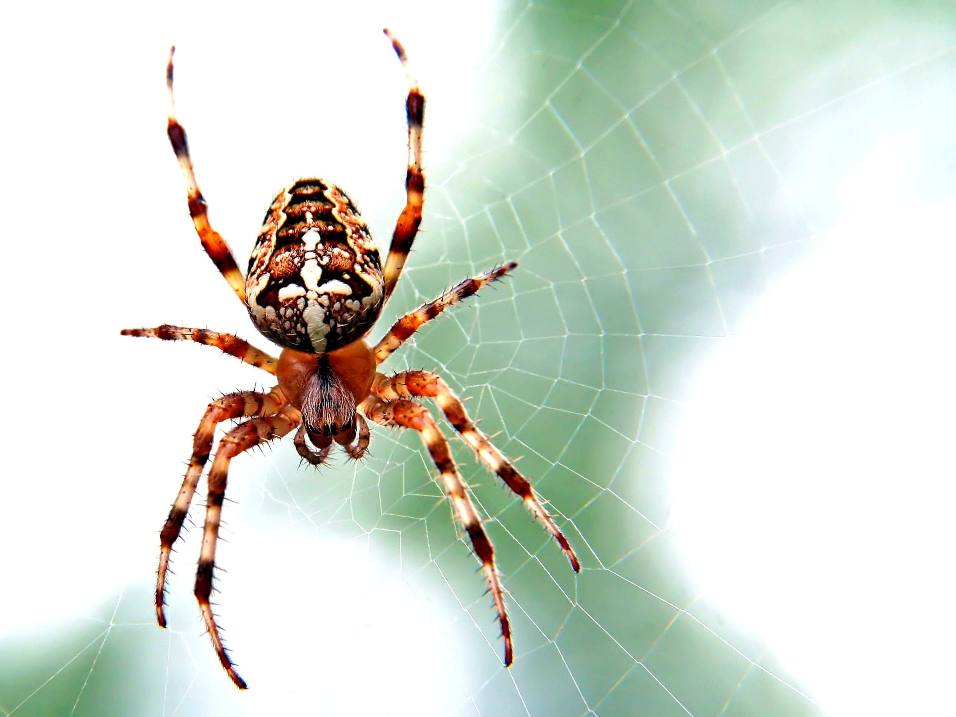 October Pest of the Month: Spiders