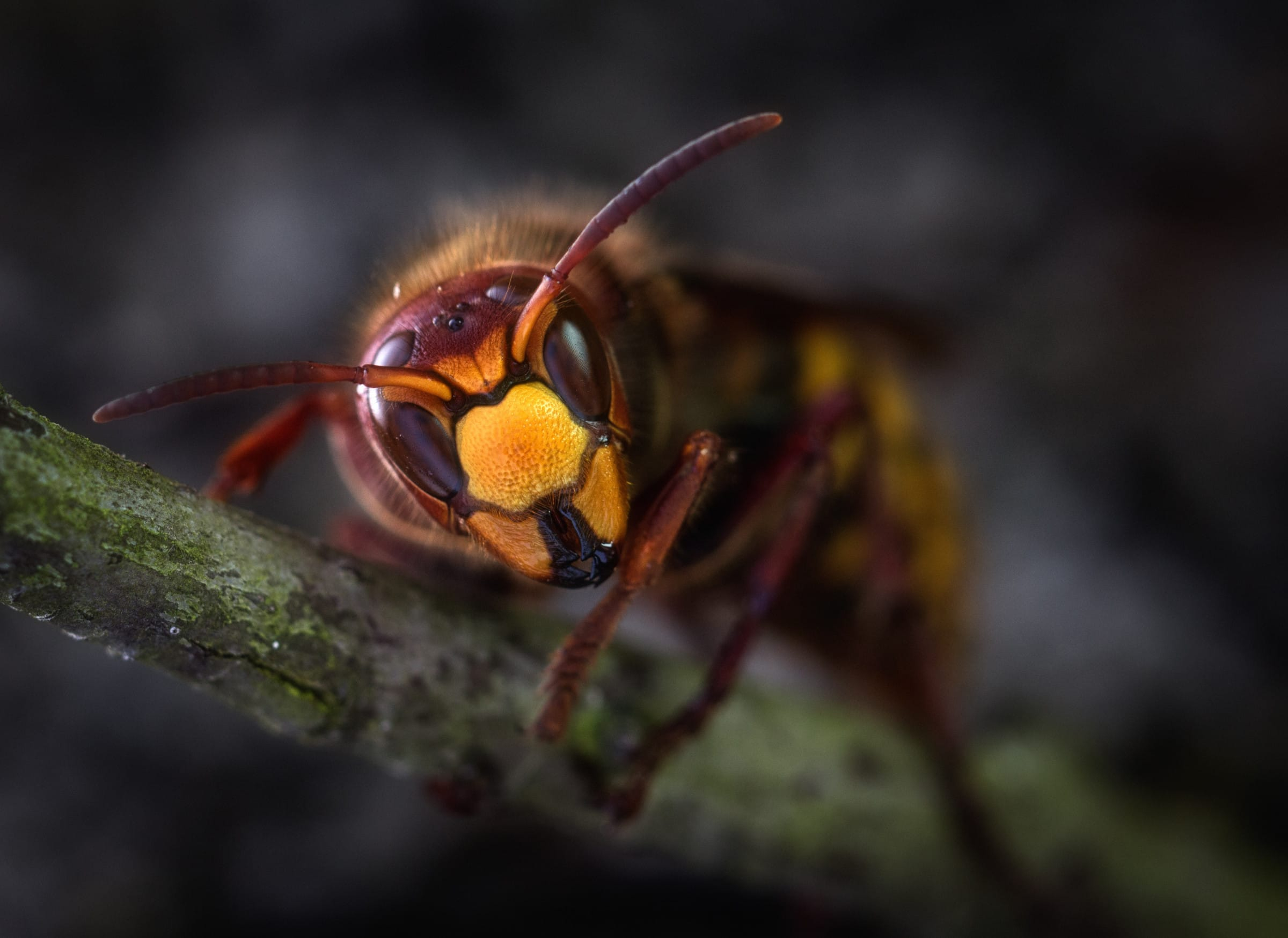 April's Pest of the Month: Wasps