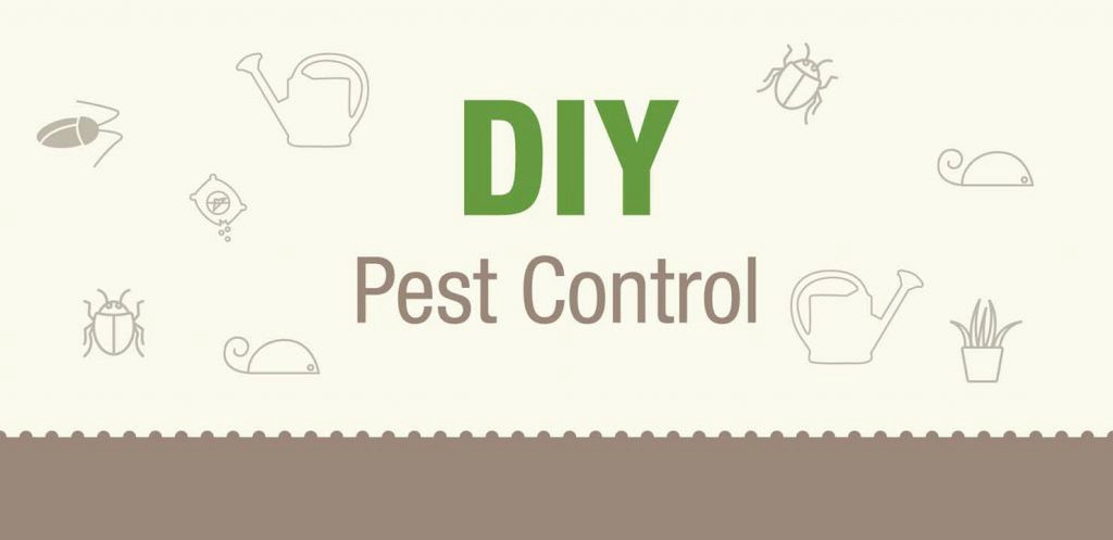 What you need to know about DIY Pest Control
