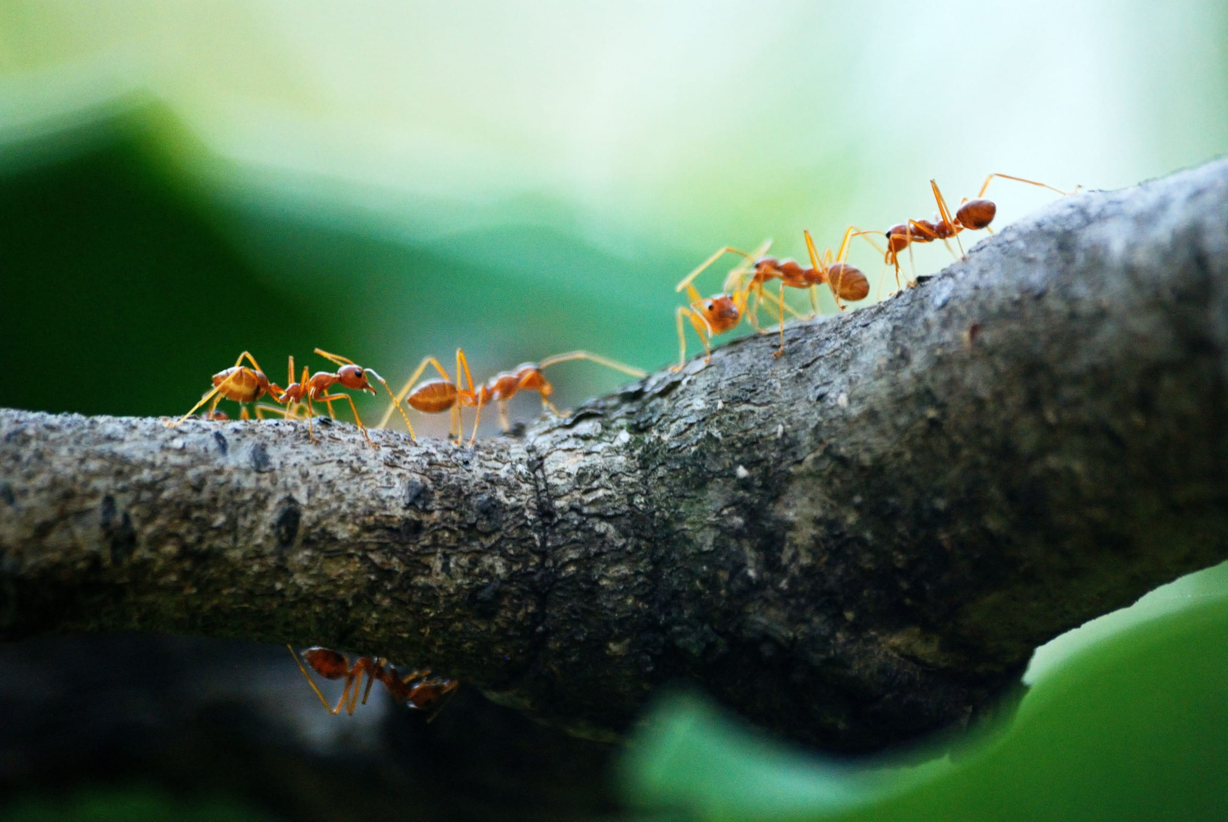 Common Ants in Louisiana and How to Get Rid of Them